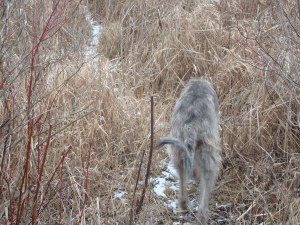 At this point we step down for the grass and follow the thin path through the tall grasses