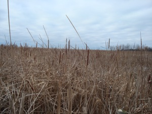 This is the view from behind. Acres of tall grasses