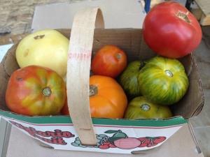 summer heritage tomatoes